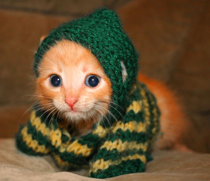 Kitten in a sweater.