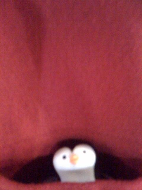 Penguin in my pocket.