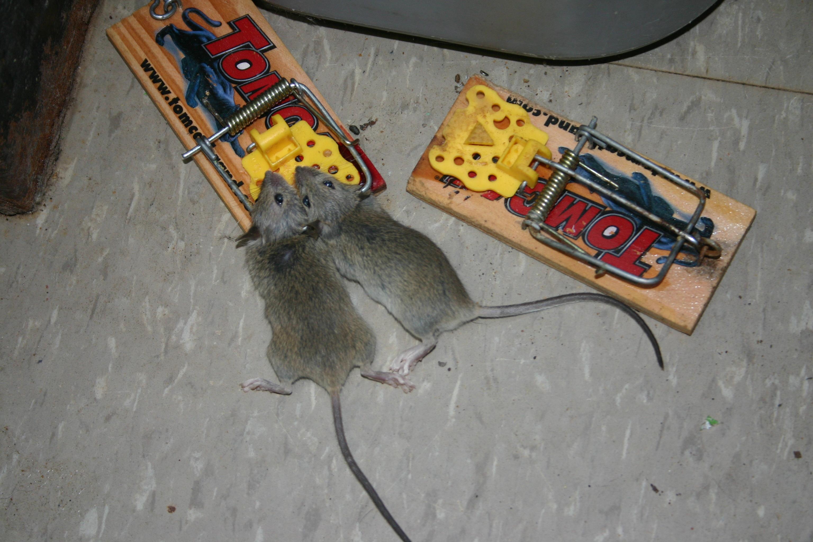 Sandwich Control:5 Mice:0